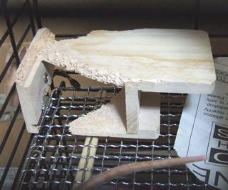 かじり木ステージ