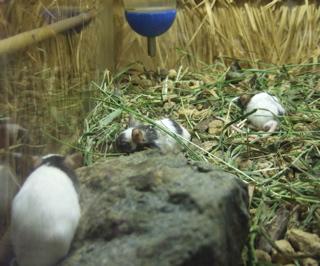 上野Zoo13
