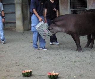 上野Zoo2