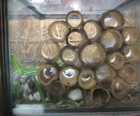 上野動物園のパンダマウス