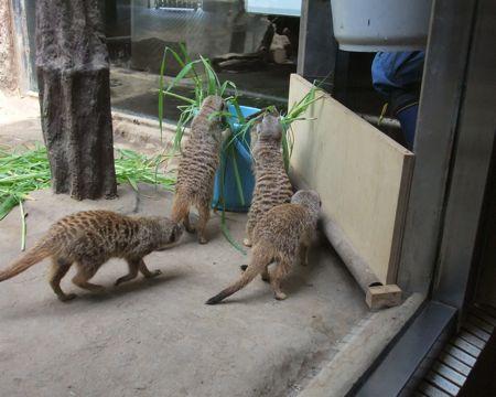 上野動物園ミーア