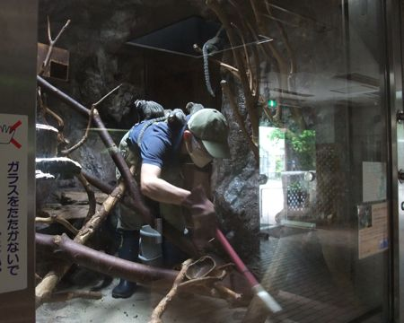 上野動物園マーモセット