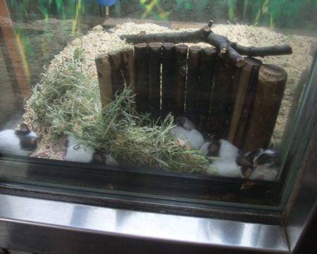 上野パンダマウス