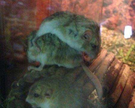 オブト@上野Zoo